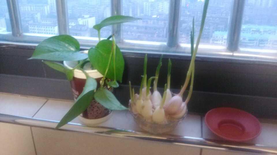 植物第二波!哈哈!多养点植物就不怕僵尸...