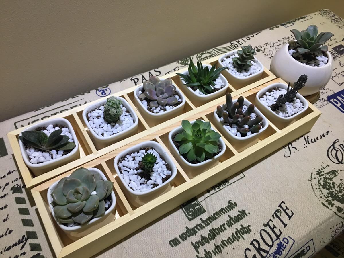 今天下午的成果,希望它们茁壮成长!