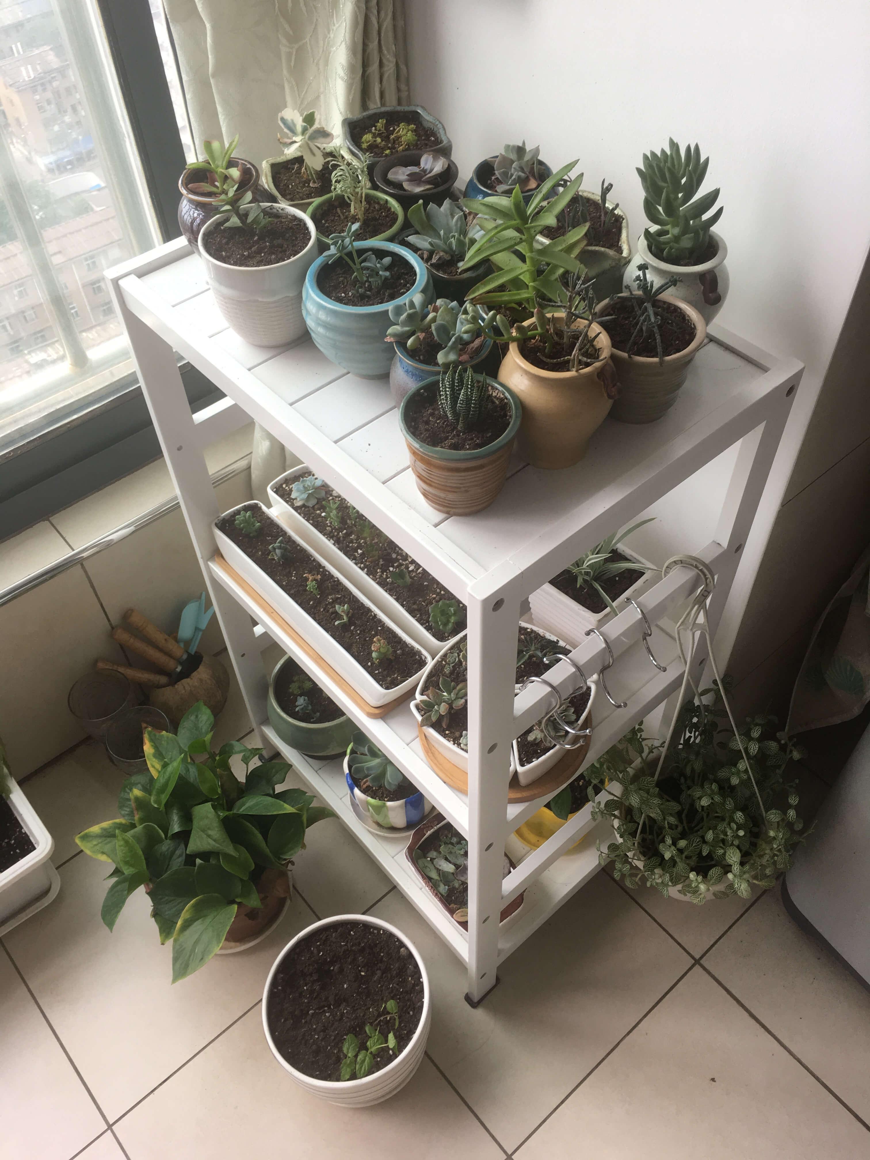 植物真的很神奇,看着顽强生命的历程,也是一种享受。发芽、发根、向阳、增生……