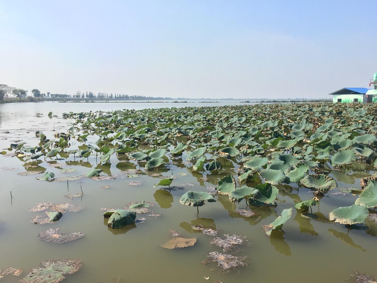 湘阴走一走,渔窑小镇&洋沙湖&鹤龙湖