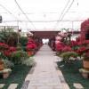 湘潭盘龙大观园,很多花!