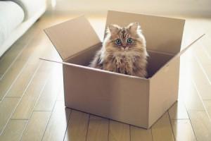 [2015.08.17]关于薛定谔的猫 引人深思的问题