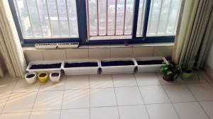 前两天把阳台整理了一下,播种完毕,期待小生命的出现……